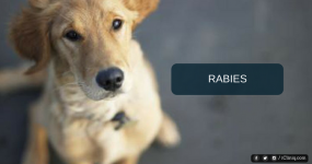 Rabies - Symptoms, Diagnosis, and Treatment