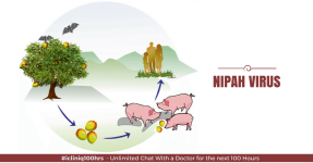 Nipah Virus: Stay Safe from This Deadly Disease