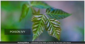 Poison Ivy - Causes, Symptoms, Diagnosis, Treatment, and Prevention