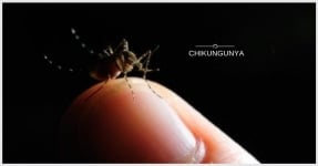 Chikungunya, a Re-emerging Viral Fever