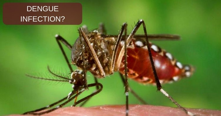 How to improve the platelet count in dengue infection?