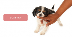 Is there any diet restriction following dog bite?